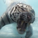 Profilbild von Tigerchen